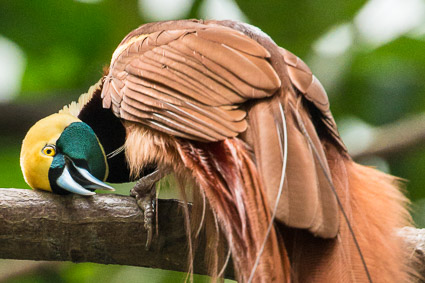 Wild life: Varirata park