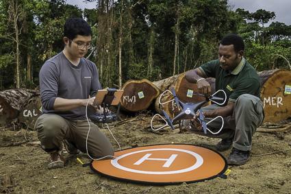 CNN : Surveillance de la forêt primaire